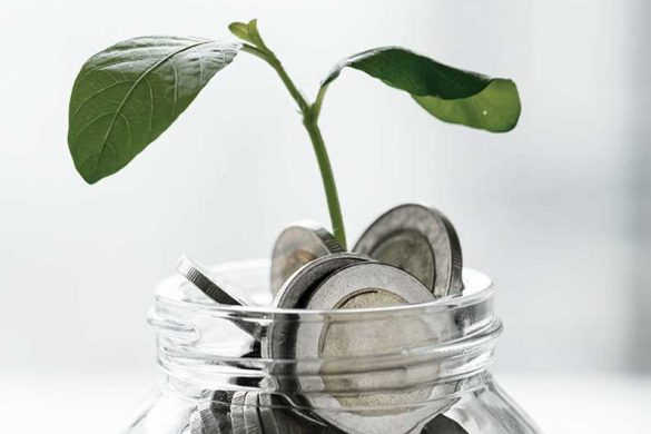 geld_pflanze_graumode